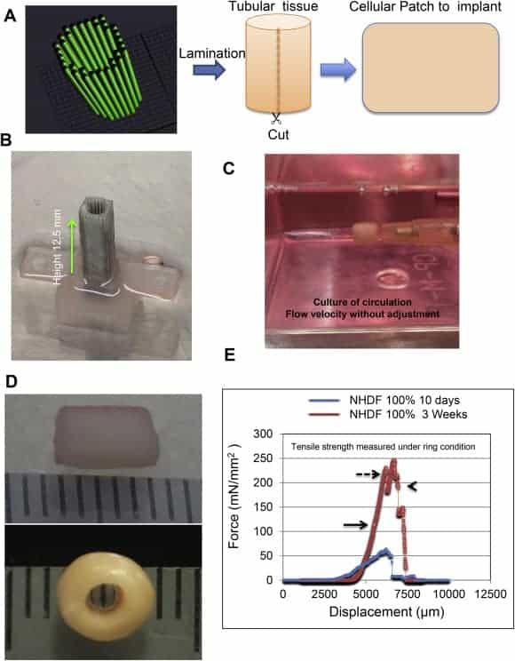 3Д Печатная диафрагма уже проходит первые тесты на животных